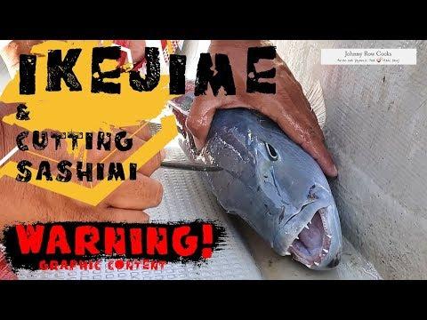 Ikejime - The Japanese Way To Kill A Fish & Prepping Sashimi