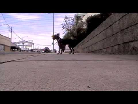 Training with Luna – working on leash walking with a fearful dog.