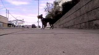 Training With Luna - Working On Leash Walking With A Fearful Dog.