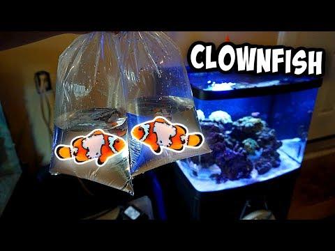 My NEW *SNOWFLAKE* Clownfish