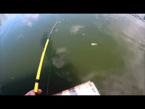 Urban Fishing From A Barge