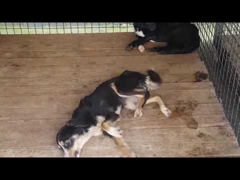 dogs pound Mediana, Nis/ canile lagher Mediana a Nis, Serbia