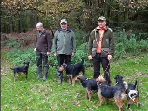 Top 10 Best Dog Breeds In Europe For Wild Boar Hunting/ TOP 10 Pasmina Za Lov Divljih Svinja
