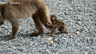 Baby monkey slowly following mom