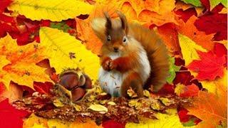 Осень в золотой косынке - детская песня и мультик