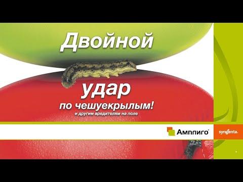 АМПЛИГО® — Решение с проверенной эффективностью против чешуекрылых вредителей