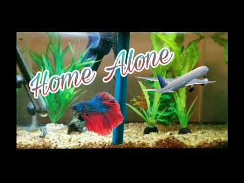 TIPS WHEN YOUR ON VACATION (BETTA FISH)