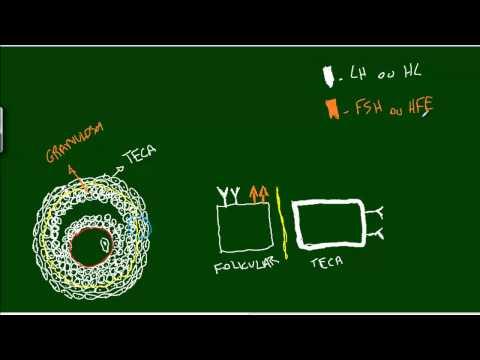 PCOS: FSH, LH, Estradiol, Oh My!!! de YouTube · Duração:  4 minutos 8 segundos