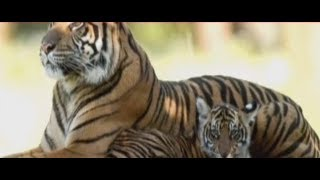 Union Minister Maneka Gandhi claims no efforts made by Forest Dept to catch Avni's cubs alive