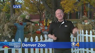 Lots Going On At Denver Zoo This Weekend