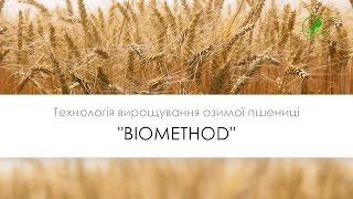 №26 Озима пшениця   Технологія вирощування БІОМЕТОД