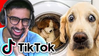 TikTok Try Not To Laugh: Pet Edition
