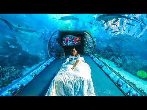 If I Lived in an Aquarium | CloeCouture