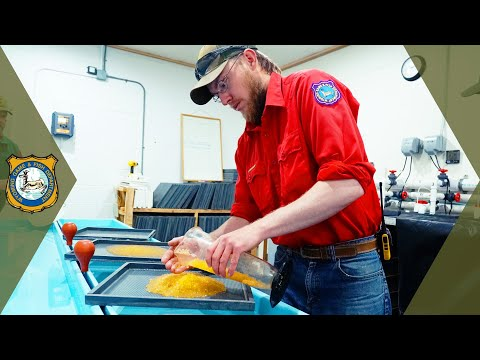 Wyoming Trout Hatchery Tour - Dubois Fish Hatchery