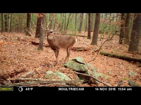 Why Making Mock Scrapes Is The Perfect Tool to Attract and Monitor Deer