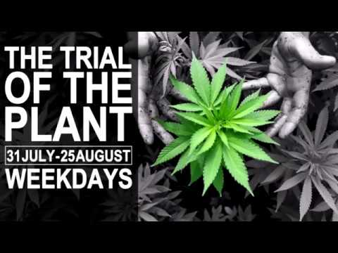 Trial of the Plant - Day 3