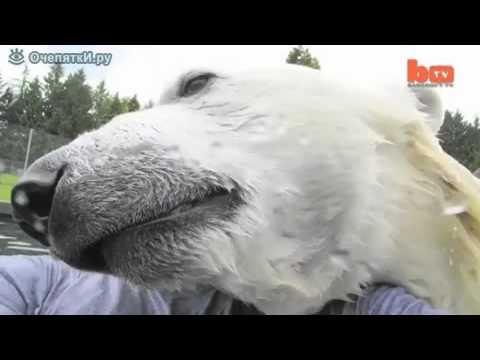 Мужик завёл белого медведя.mp4