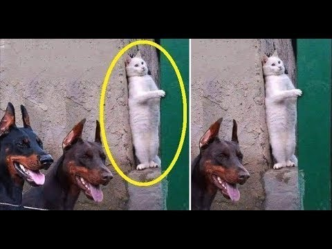 ♥Cute Cats and Kittens Doing Funny Things 2018♥ #8 - Funny Cat compilation