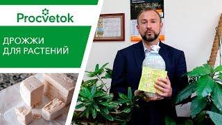 видео Приемы выращивания комнатных растений
