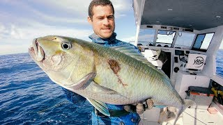 Spearfishing Tips For Hunting MONSTER JOBFISH Catch And Cook   Bird Rescue   GOPRO x YBS - Ep 72