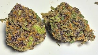 """Ace of Spades"" - (Strain Review)"