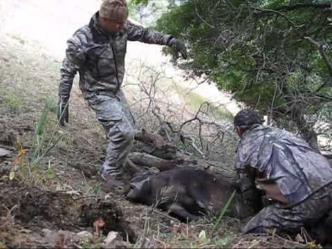 Tejon Ranch Archery Pig Hunt 6-2011