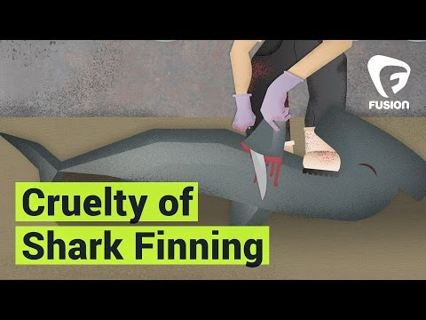 Cruelty Of Shark Finning | Sharks Attacked