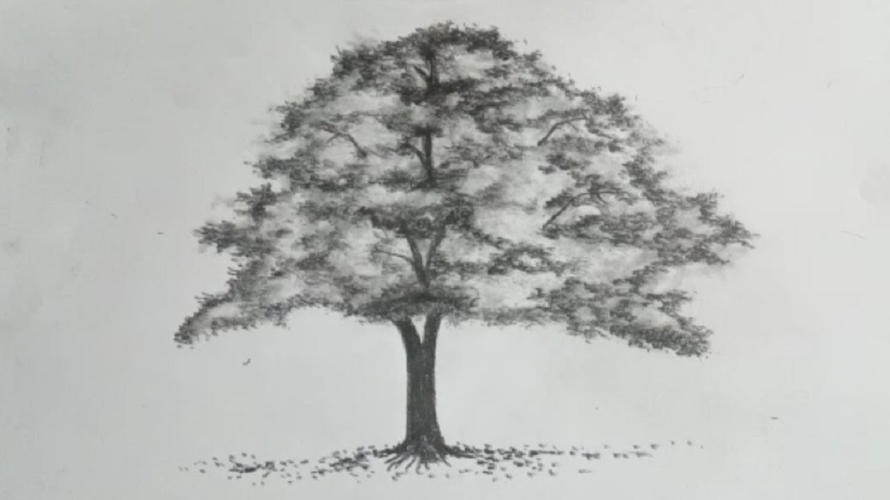 Tree Drawing Easy How To Draw A Tree With Pencil Sketch Simple Tree Drawing Youtube