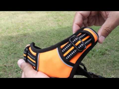 Chai's Choice Dog Harness | How to Adjust...