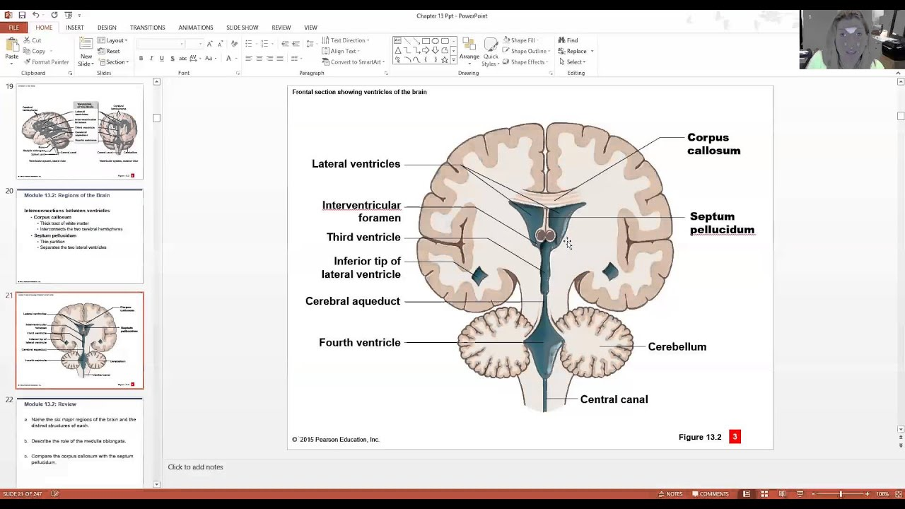 The Brain and Cranial Nerves Part 1 - YouTube
