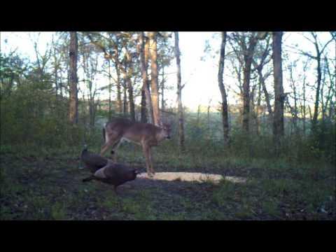 Deer Turkeys 4 27 15