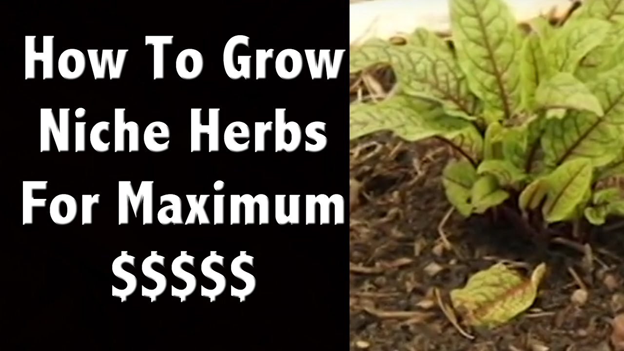 growing niche herbs to sell for maximum profit in an inexpensive