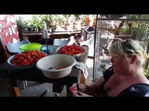 Fresh & Organic South Africa-Spicy Chillies