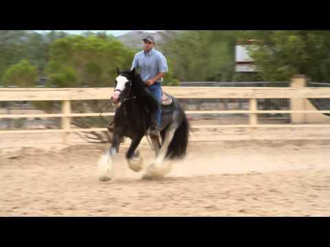 Desert Jewel Harrison - Under Saddle