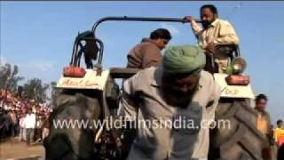 Man pulling tractor in the heart of Punjab!