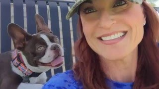 6 Month Old Boston Terrier Learns Obedience and Off Leash Freedom