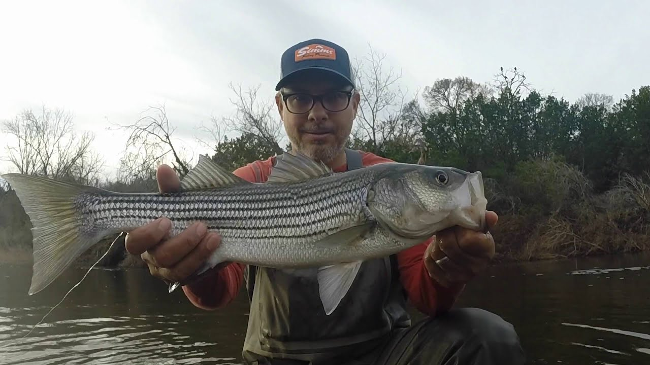 Fly fishing for striper on the brazos river youtube for Brazos river fishing