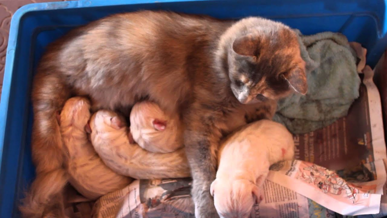 Dog Adopts Cats