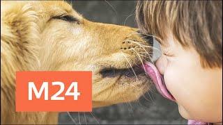 Смотреть видео Путин подписал закон об ответственном обращении с животными - Москва 24 онлайн