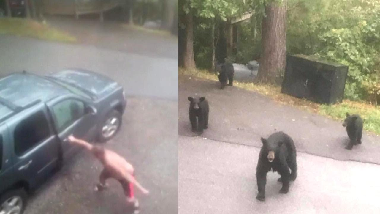 Bears Attack Man's Car After He and His Family Flee Hurricane Irma