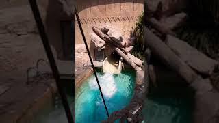 Wild wadi Waterpark Dubai UAE