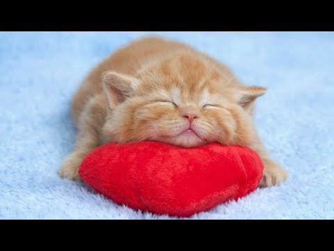 Cute Kittens Sleeping In Most Adorable Ways - TOO CUTE