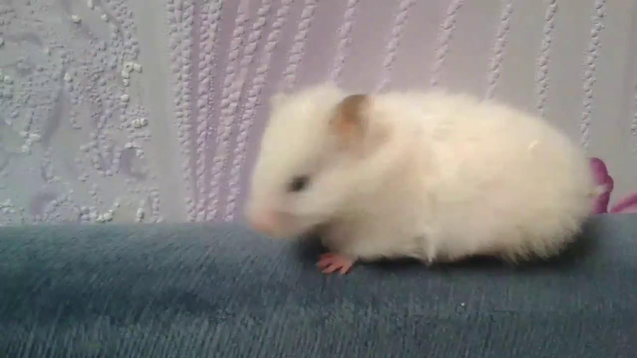 Сонник крыса, к чему снится крыса во сне видеть ▷ узнайте что. Крыса для беременной, по соннику fеlomеna, ассоциируется с. Белая крыса▷.
