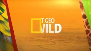 Highlights National Geographic Wild Channel Nexmedia Ch.202 March 2018