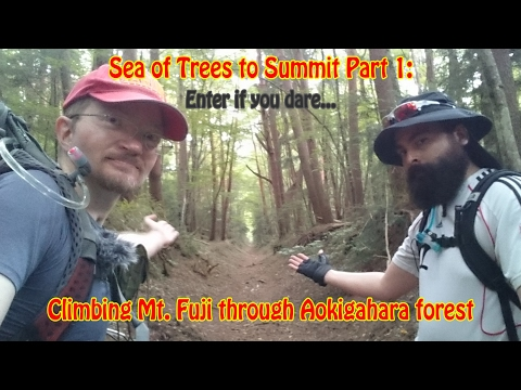 Sea of Trees to Summit Part 1: Climbing Mt. Fuji through Aokigahara forest (青木ケ原樹海)