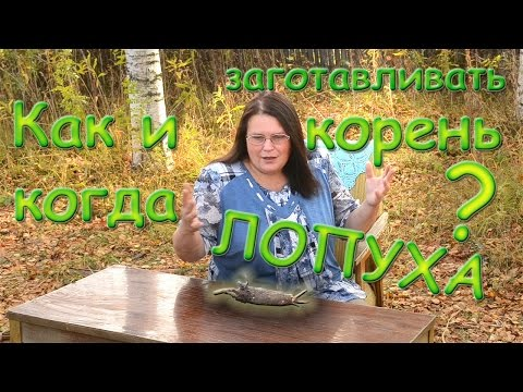 Как заготовить корень лопуха осенью