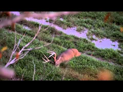 Hunting Whitetail Deer in Mississippi