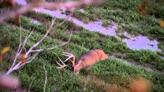 Hunting Whitetail Deer in Mississippi – Primos Truth About Hunting