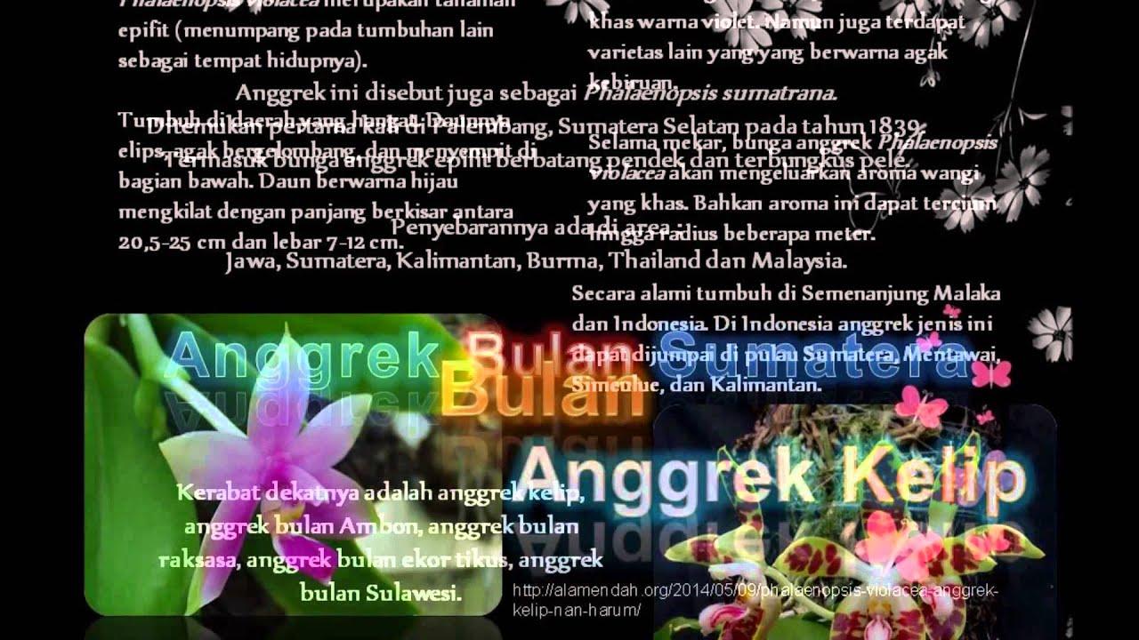 Anggrek Ekor Tikus godean.web.id