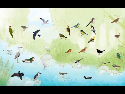 el riu ocells de riu